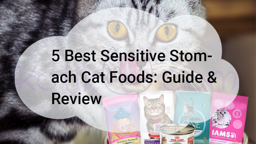 5 Best Sensitive Stomach Cat Foods Guide & Review