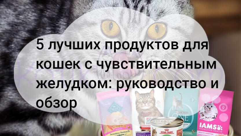 5 лучших продуктов для кошек с чувствительным желудком руководство и обзор