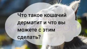 Что такое кошачий дерматит и что вы можете с этим сделать?