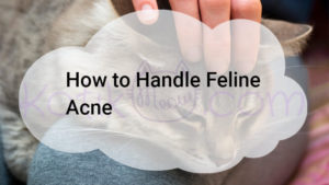 How to Handle Feline Acne