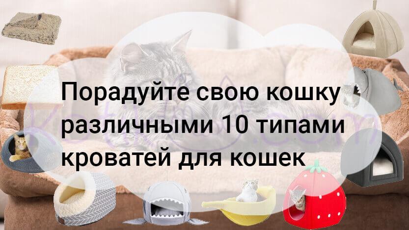Порадуйте свою кошку различными 10 типами кроватей для кошек