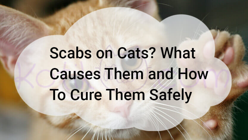 Scabs on Cats? What Causes Them and How To Cure Them Safely