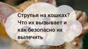 Струпья на кошках? Что их вызывает и как безопасно их вылечить