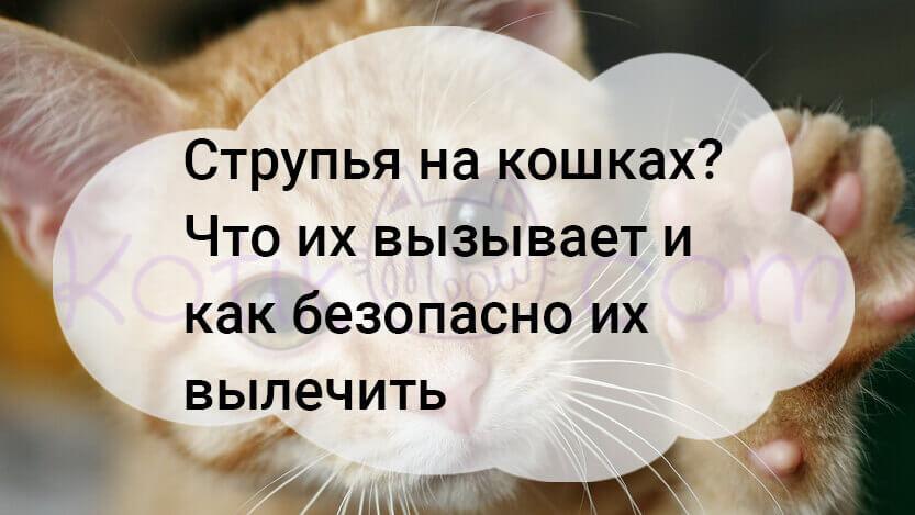 Струпья на кошках как безопасно их лечить?