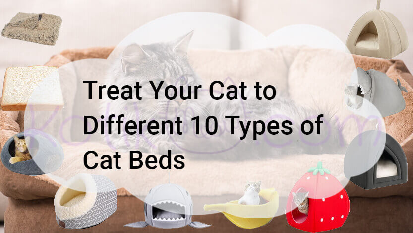 Treat Your Cat to Different 10 Types of Cat Beds