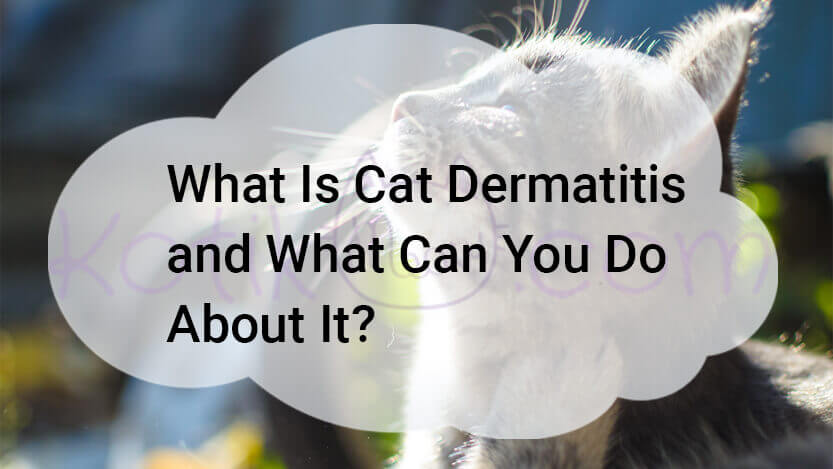 What Is Cat Dermatitis and What Can I Do?