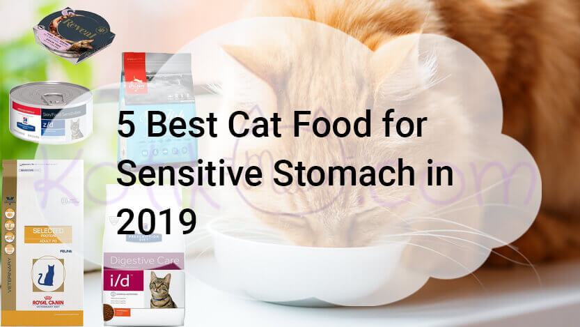 5 Best Cat Food for Sensitive Stomach in 2019