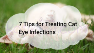 7 Tips for Treating Cat Eye Infections