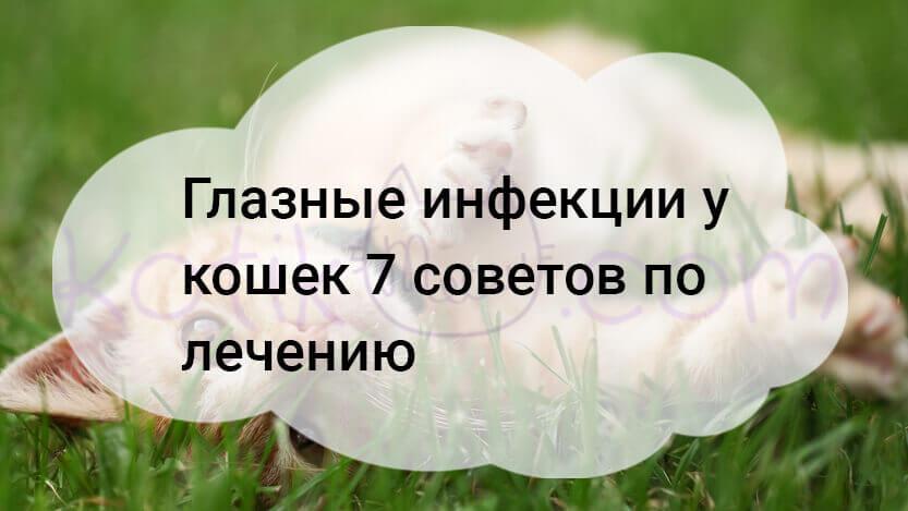 Глазные инфекции у кошек 7 советов по лечению
