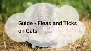 Guide all about Fleas and Ticks on Cats