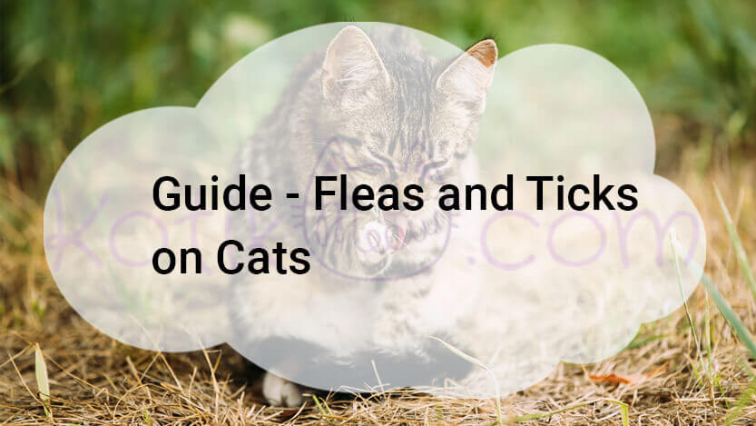 Guide – Fleas and Ticks on Cats