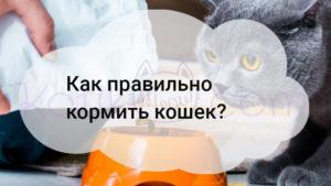 Как правильно кормить кошек?