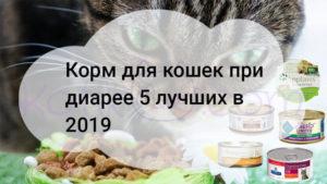 Корм для кошек при диарее 5 лучших в 2019