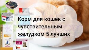 Корм для кошек с чувствительным желудком 5 лучших