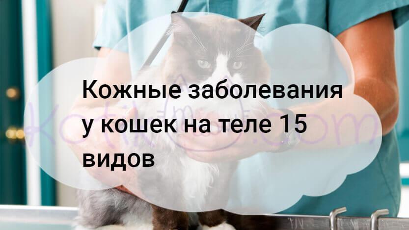 Кожные заболевания у кошек на теле 15 видов