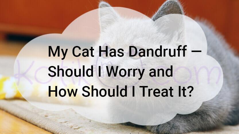 My Cat Has Dandruff Should I Worry How Treat It?