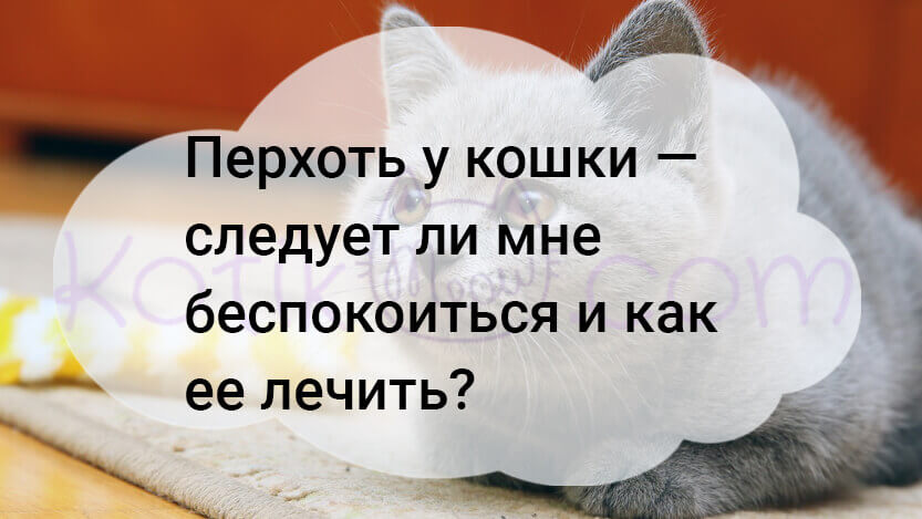Перхоть у кошки должна меня беспокоить, как ее лечить?