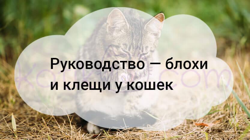 Блохи и клещи у кошек, краткое руководство