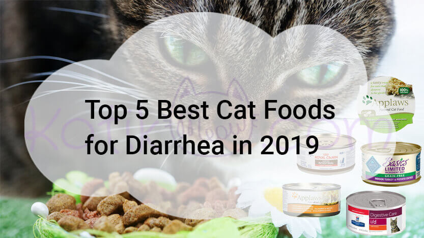 Top 5 Best Cat Foods for Diarrhea in 2019