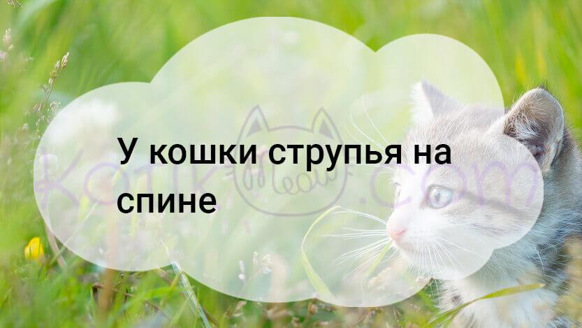 У кошки струпья на спине