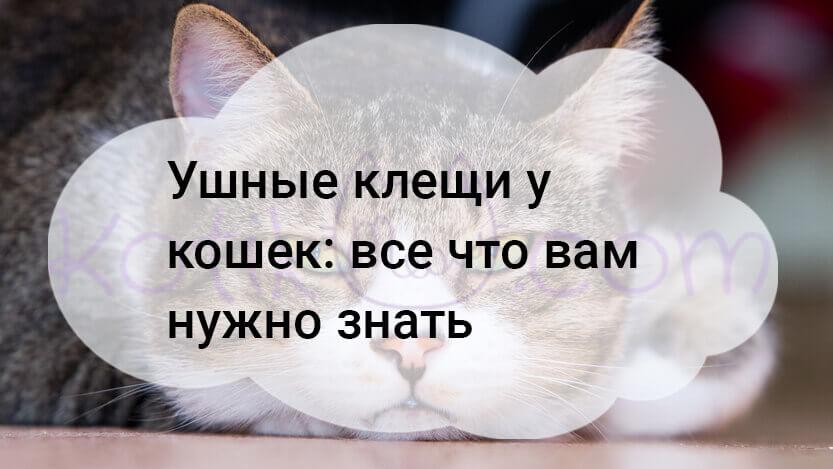Ушные клещи у кошек все что вам нужно знать