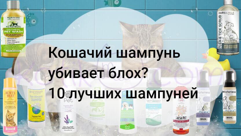Кошачий шампунь убивает блох? 10 лучших шампуней