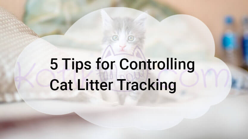 5 Tips for Controlling Cat Litter Tracking