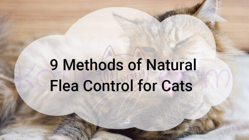 9 Methods of Natural Flea Control for Cats