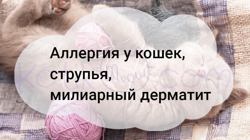 Аллергия у кошек, струпья, милиарный дерматит