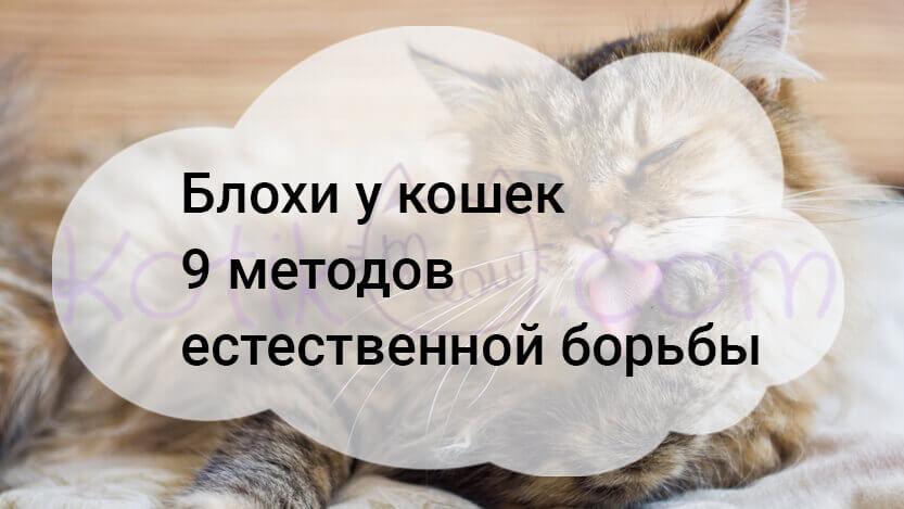 Блохи у кошек 9 методов естественной борьбы