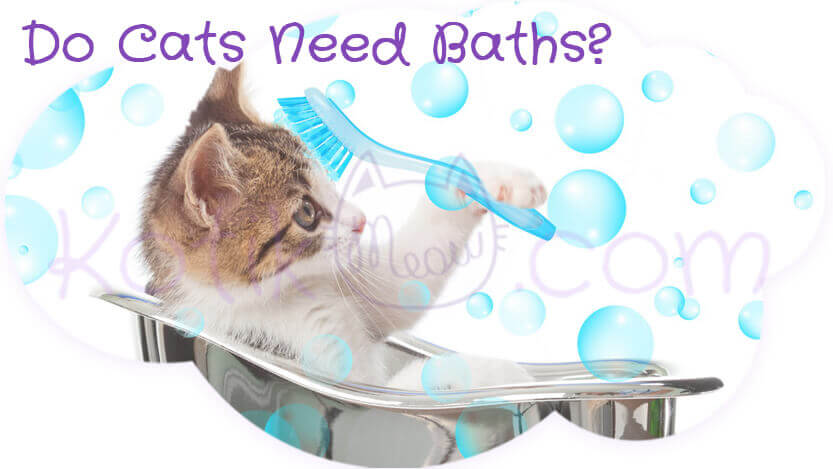 Do Cats Need Baths