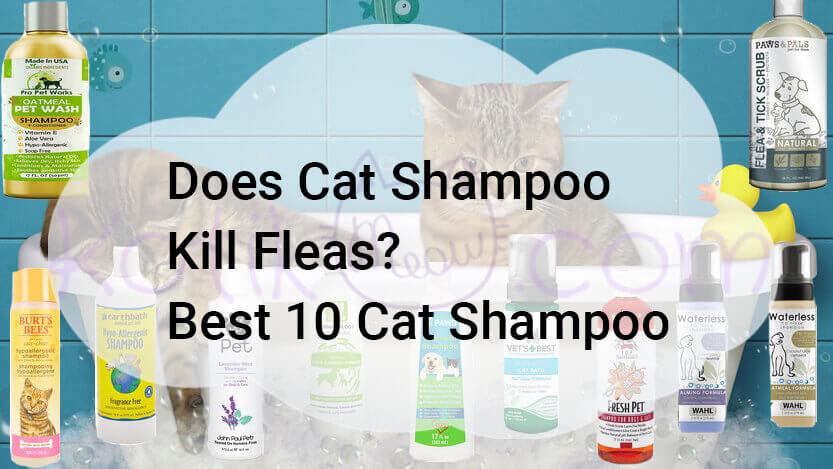 Does Cat Shampoo Kill Fleas? Best 10
