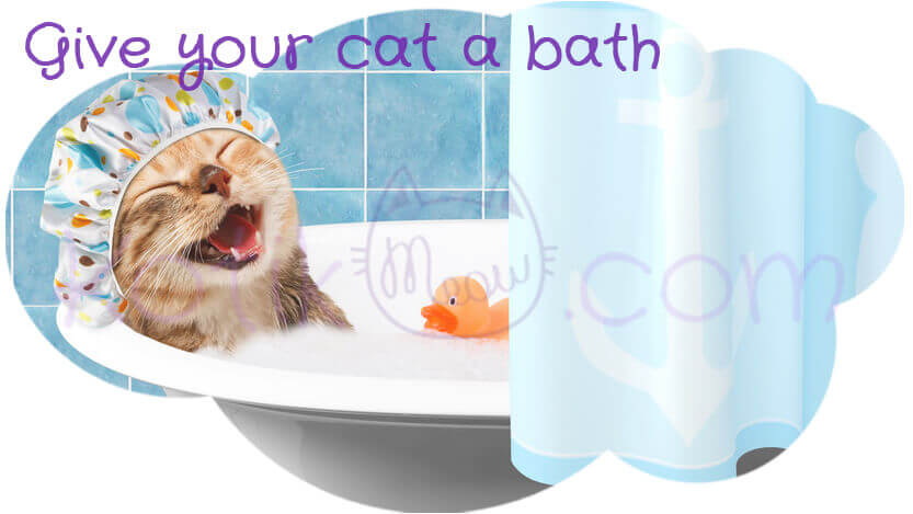 Give-your-Cat-a-bath