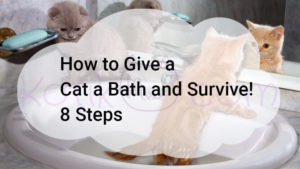 How to Give a Cat a Bath and Survive! 8 Steps