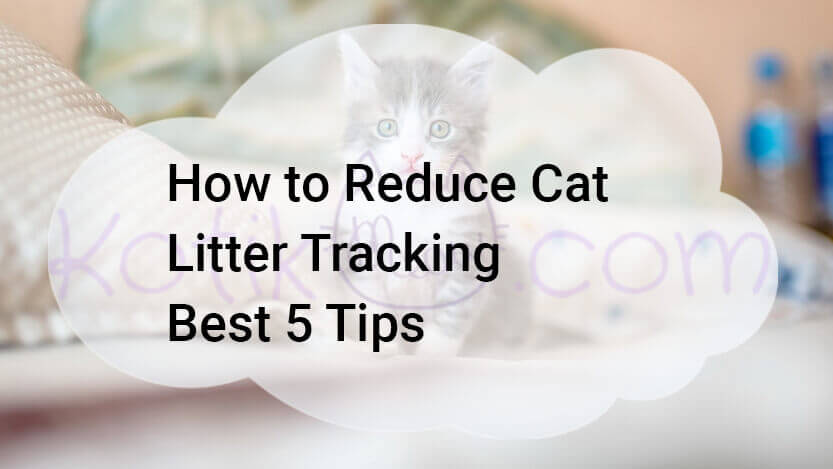 How to Reduce Cat Litter Tracking Best 5 Tips