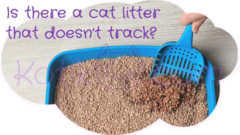 Is there a cat litter that doesn't track