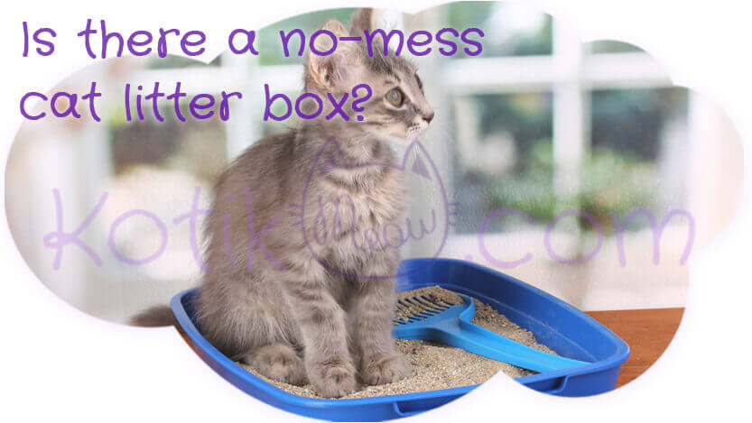 Is there a no-mess cat litter box