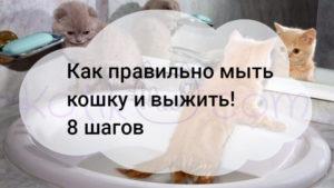 Как правильно мыть кошку и выжить! 8 шагов
