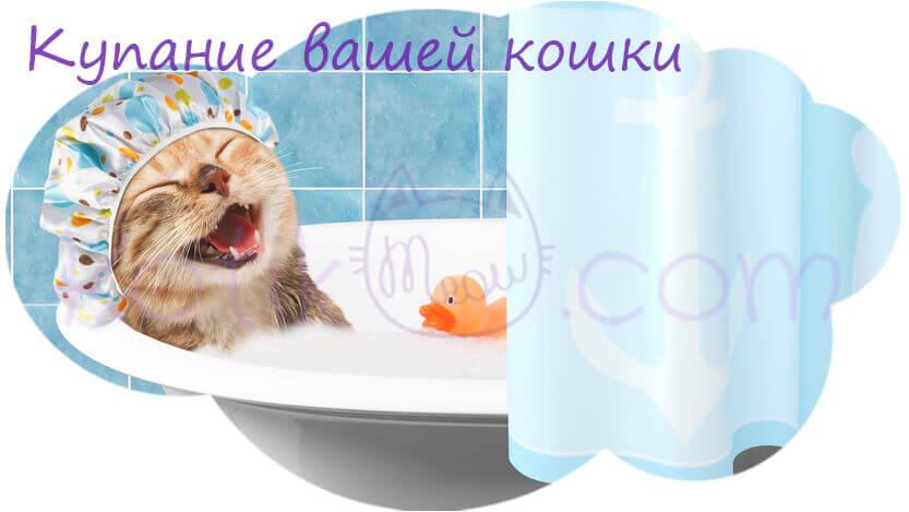 Купание вашей кошки