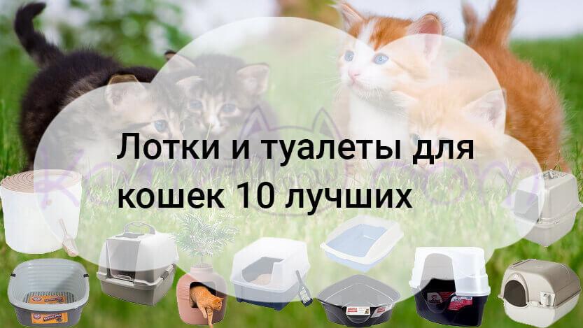 Лотки и туалеты для кошек 10 лучших