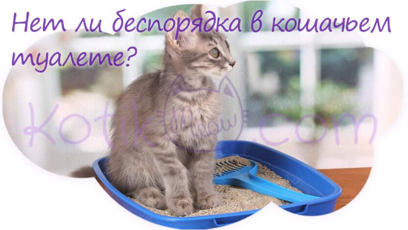 Нет ли беспорядка в кошачьем туалете