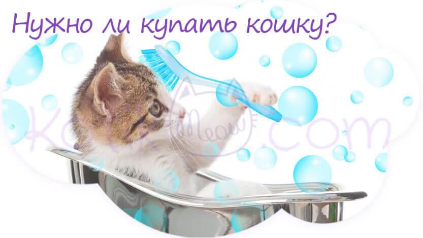Нужно ли купать кошку