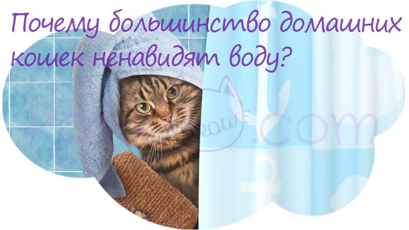 Почему большинство домашних кошек ненавидят воду