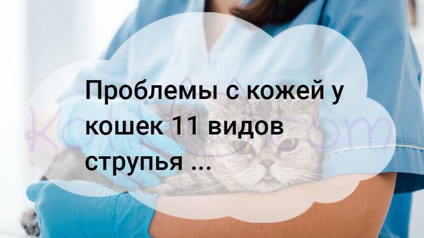 Проблемы с кожей у кошек 11 видов струпья …