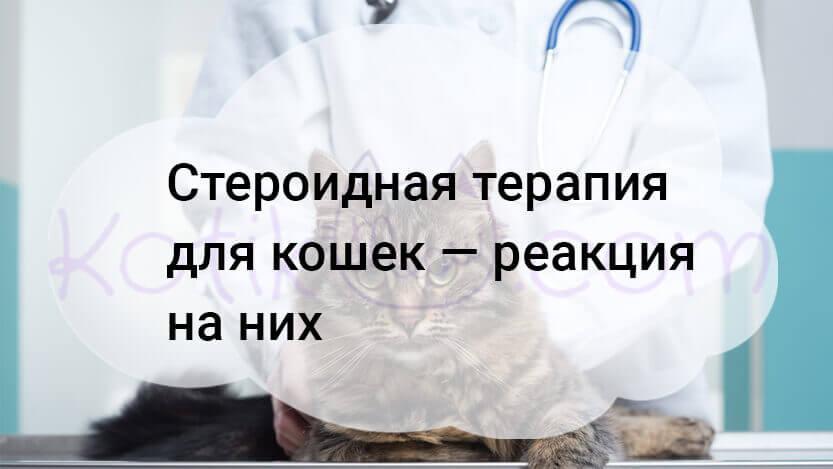Стероидная терапия для кошек — реакция на них