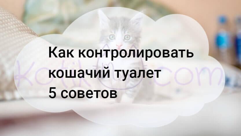 Как контролировать кошачий туалет 5 советов