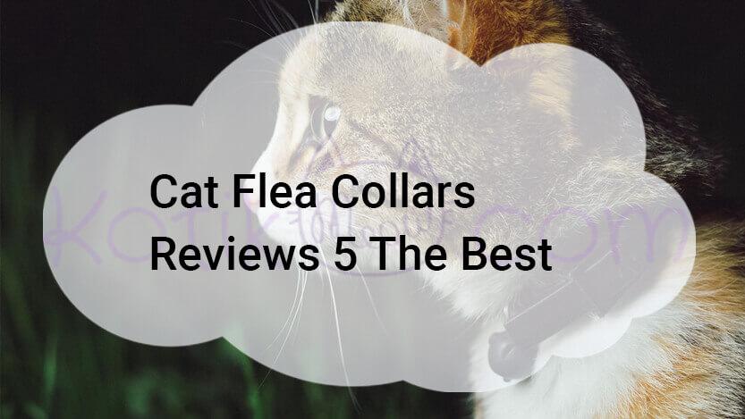 Cat Flea Collars Reviews 5 The Best