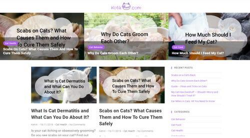 Cats health Cat blog Food for cats Cat supplies Cat behavior