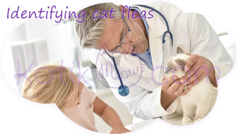 Identifying cat fleas
