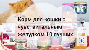 Корм для кошки с чувствительным желудком 10 лучших в 2020